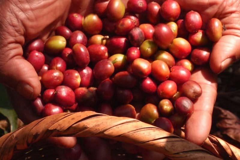 café en Madagascar